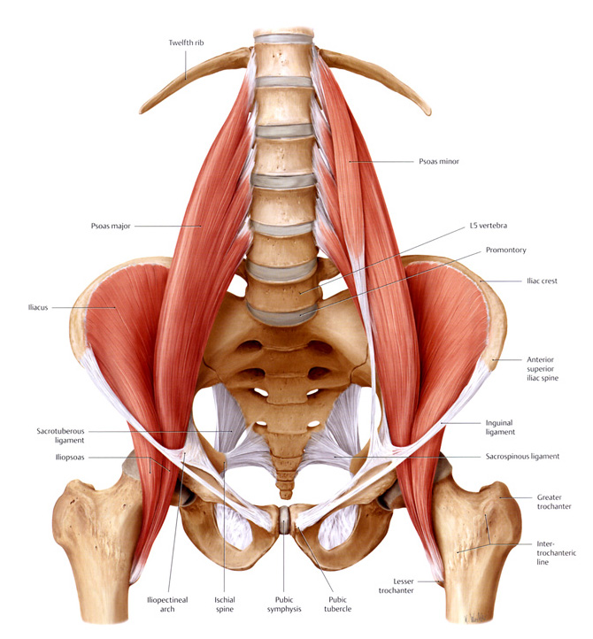 Hip Flexors and Back Pain - Colorado Springs Rehabilitation Centers
